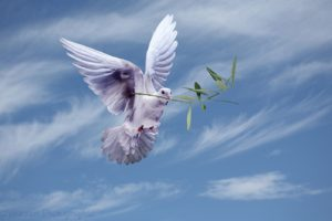 A white dove carries the olive branch of peace